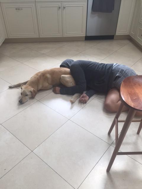 dogflr